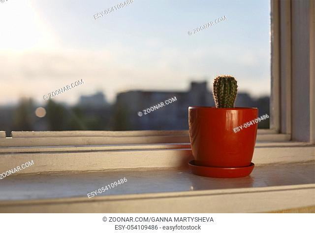 The beginning of the day. Cactus on the windowsill of the office. Sunrise in a modern city