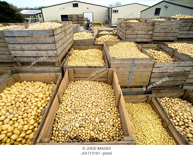 Stacked crates of fresh harvested potatoes outside warehouse