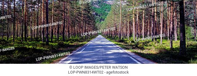 A view along a road through sprawling forest in the mountainous region of Aseral