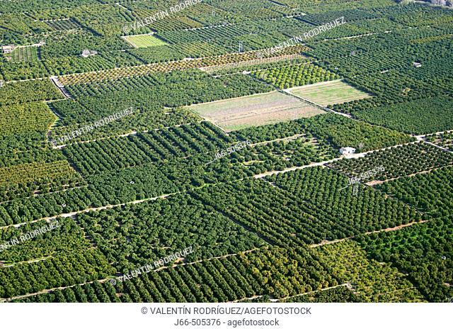 Orange tree fields. Valencia province, Comunidad Valenciana, Spain