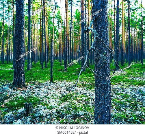 Horizontal vivid vibrant green forest vertical composition background backdrop