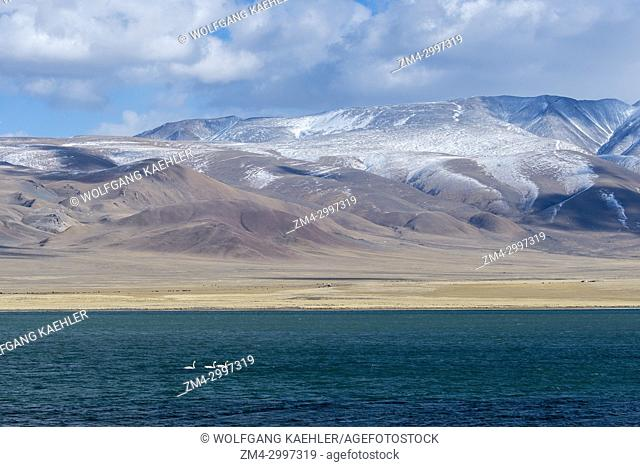 The Shar Nurr Lake with Whooper swans (Cygnus cynus) and the Altai Mountains near the city of Ulgii (Ölgii) in the Bayan-Ulgii Province in western Mongolia