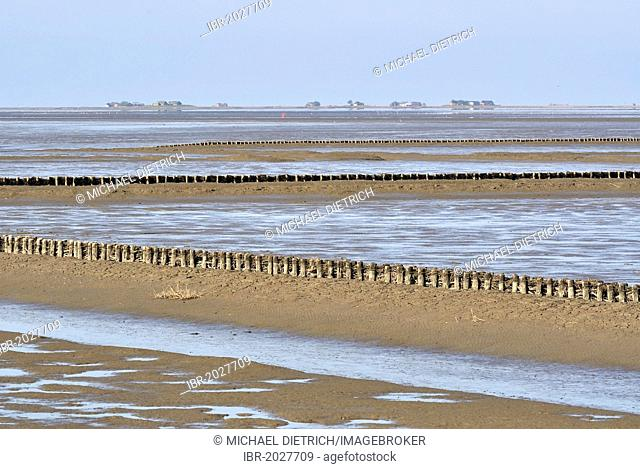 View across the Wadden Sea with coastal protection, groynes, Hallig Langeness, small island, at back, North Sea shore, Schleswig-Holstein Wadden Sea National...