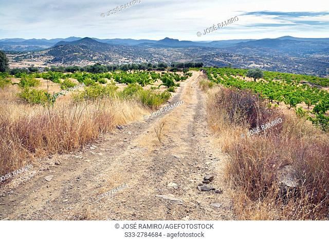 Road to the vineyars in Cebreros. Avila. Castilla Leon. Spain. Europe