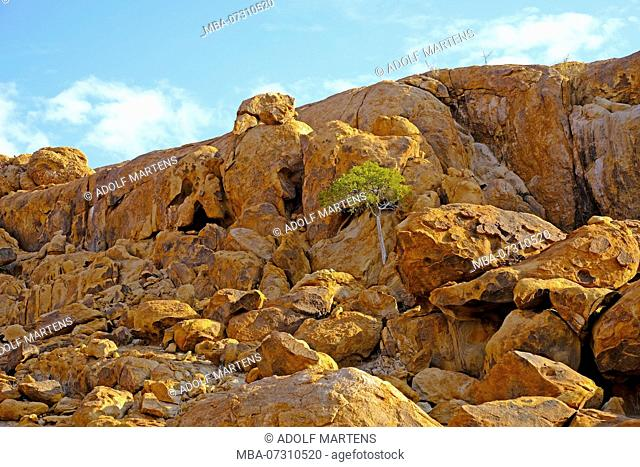 rugged granite rocks with hill of slip rock and tree in the rock, Brandberg area in Namibia, Damaraland