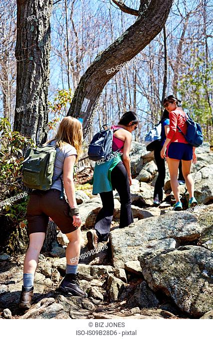 Rear view of four female hikers hiking in forest, Harriman State Park, New York State, USA