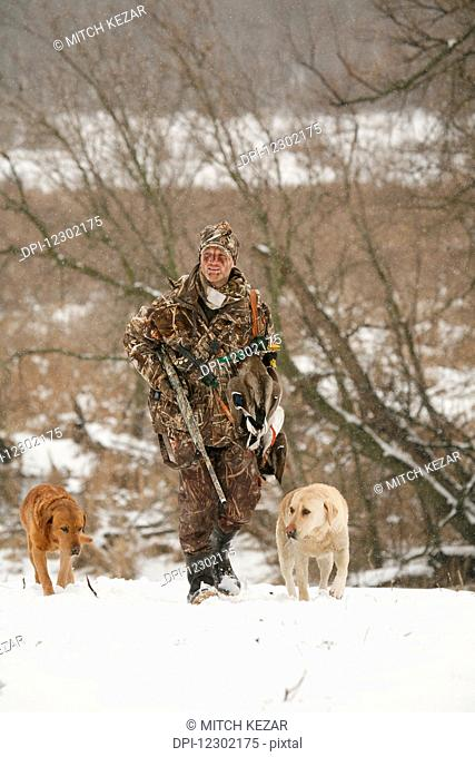 Waterfowl Hunter Walking With Yellow Labs and Holding Dead Birds
