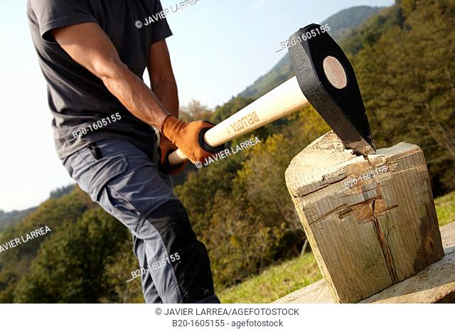 Farmer cutting wood with wedge club, Sledgehammer wedge, Agricultural and gardening hand tool, Usurbil, Gipuzkoa, Basque Country, Spain