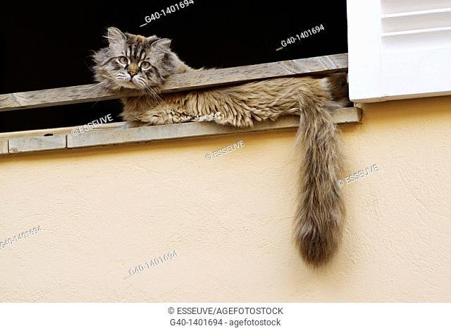 Cat in the window. San Telmo, Majorca, Balearic Islands. Spain