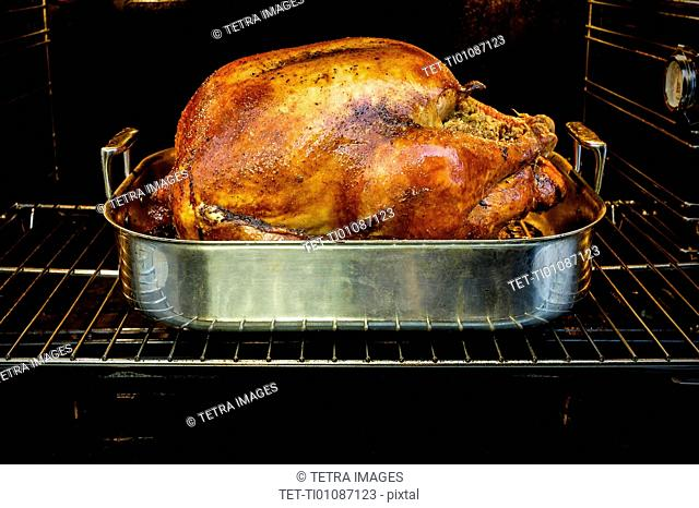 Roasted turkey for Thanksgiving in oven