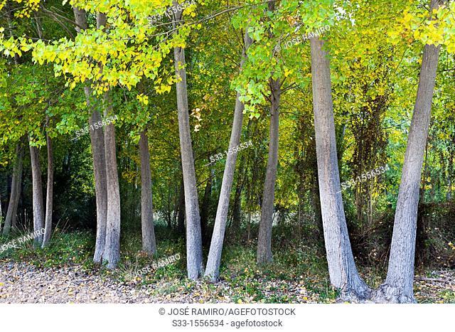 Autumn in Aragosa  Guadalajara  Castilla la Mancha  Spain