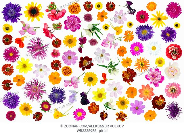 Big summer and autumn flowers set isolated collage