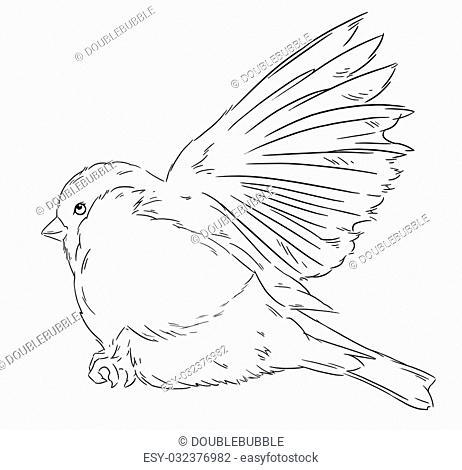 Bullfinch bird winter nature wildlife illustration contour