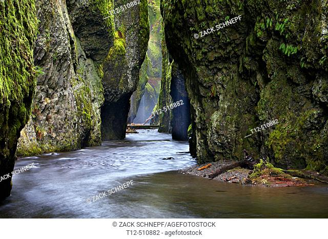 Oneonta Gorge, in the Columbia River Gorge, Oregon