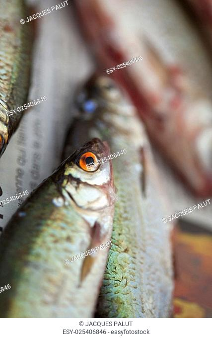 Close up a fresh fishes before cooking