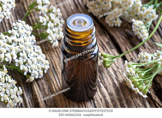A bottle of essential oil with fresh blooming yarrow