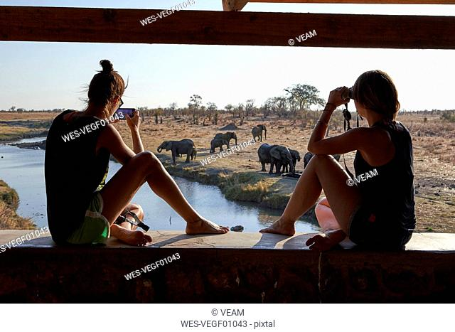 Woman watching and taking pictures of a herd of elephants in the river from a viewpoint, Hwange National Park, Zimbabwe