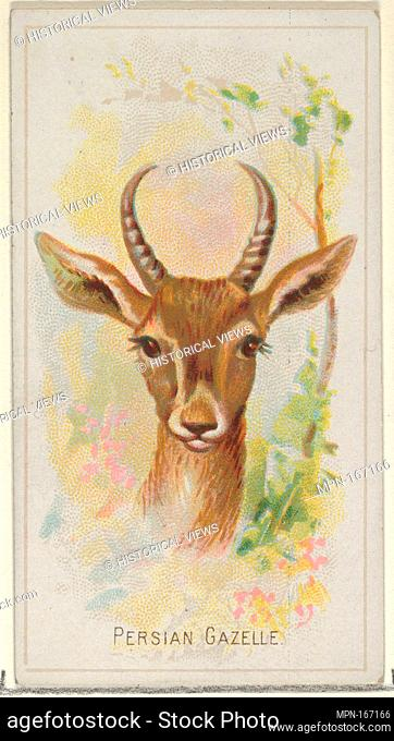 Persian Gazelle, from the Wild Animals of the World series (N25) for Allen & Ginter Cigarettes. Publisher: Allen & Ginter (American, Richmond