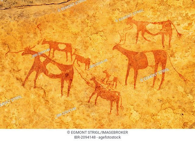 Painted cows, neolithic rock art at Tin Meskis, Adrar n'Ahnet, Algeria, Sahara, North Africa
