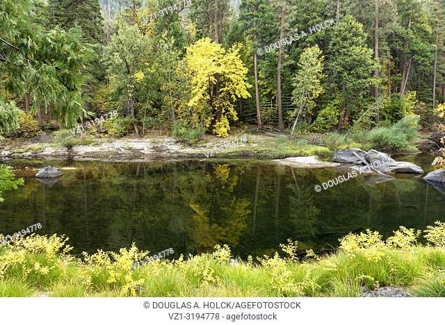 Fall Reflections on the Merced River Yosemite National Park, California USA