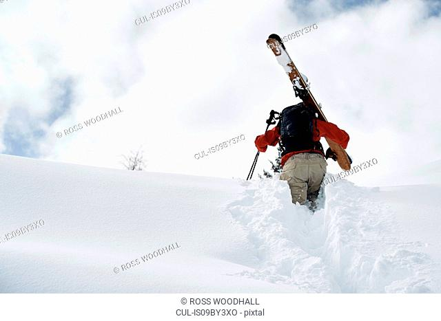 Male skier trudging up snow covered mountain, rear view, Alpe-d'Huez, Rhone-Alpes, France