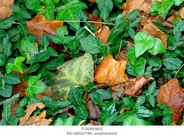 Greenery and dried leaves together