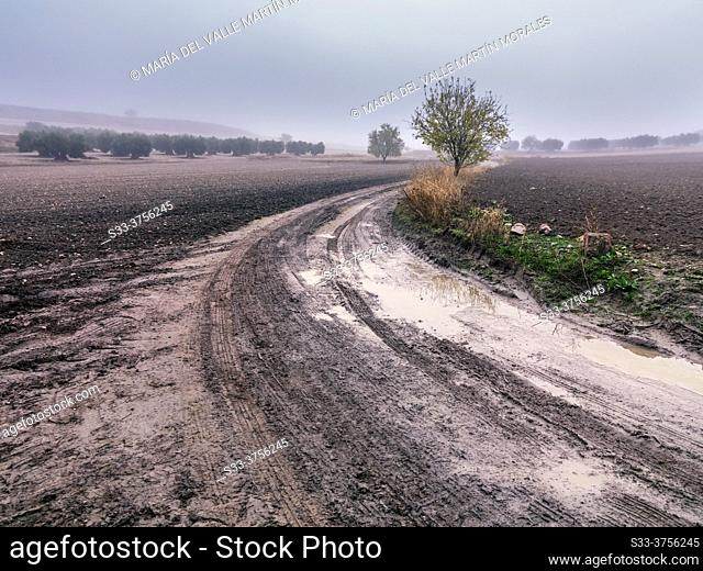 Puddle, almond tree, olive trees and fog in the Wolve road. Pinto. Madrid. Spain. Europe