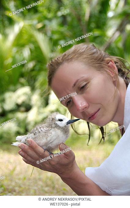 woman looking at a chick sitting on her hand - Fairy, White Tern Bird or holy ghost bird (Gygis alba) Denis island, Indian Ocean, Seychelles