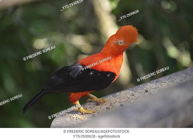 Aviario National de Colombia, Isla Baru, Colombia, South America