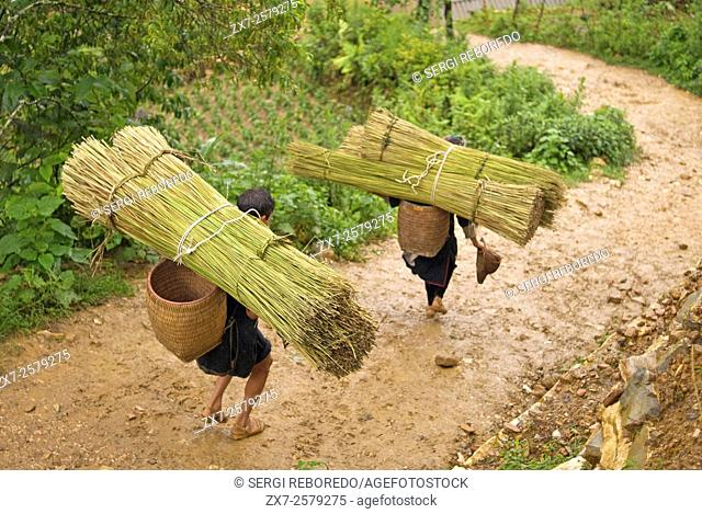 Some women carry bamboo in the way of Sapa to the nearby villages of Lao Chai and Ta Van. Vietnam
