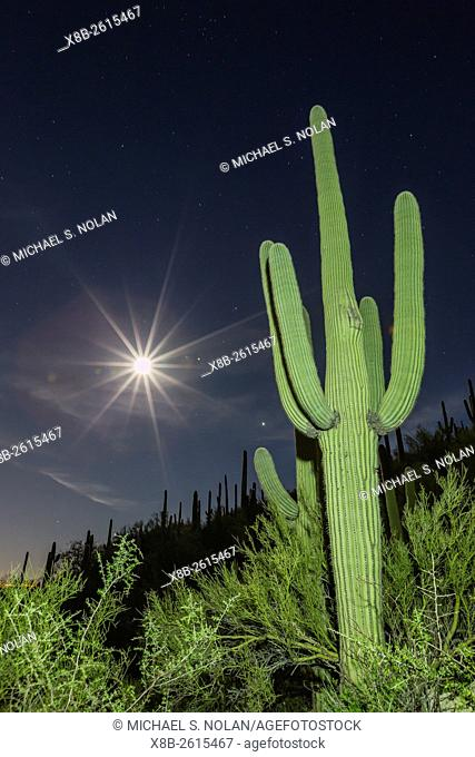 Giant saguaro cactus, Carnegiea gigantea, under full moon in the Catalina Mountains, Tucson, Az, U. S. A