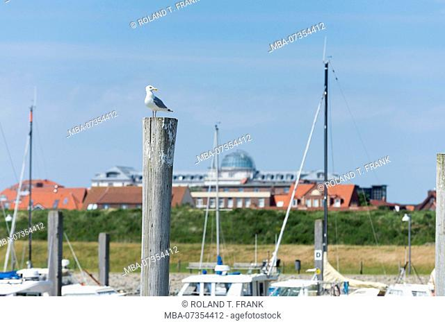 Germany, Lower Saxony, East Frisia, Juist, seagull in the harbor