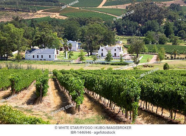Vineyard Zorgvliet, landscape of the winelands, wineries, vineyards, Stellenbosch, Winelands, Western Cape, South Africa, Africa