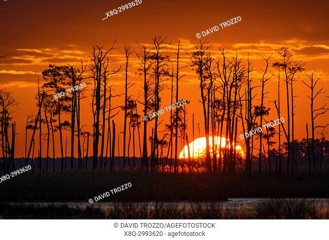 Sunrice over tidal wetlands, Blackwater National Wildlife Refuge, Cambridge, Maryland