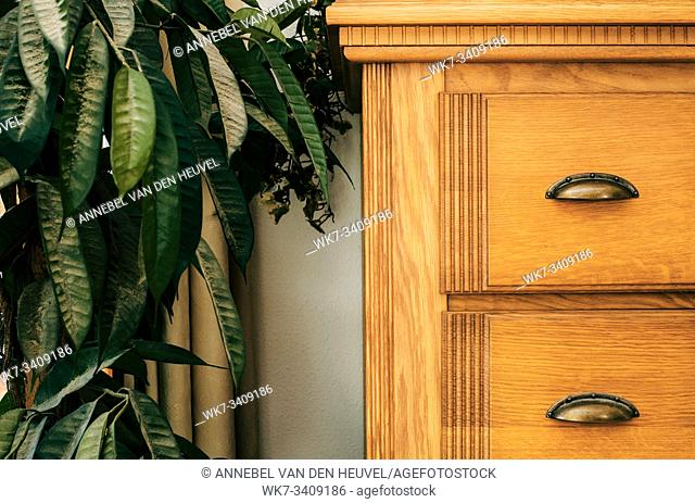 Brown closet with green house plant close-up background texture home interior texture