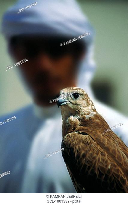Arab man holding a falcon, UAE