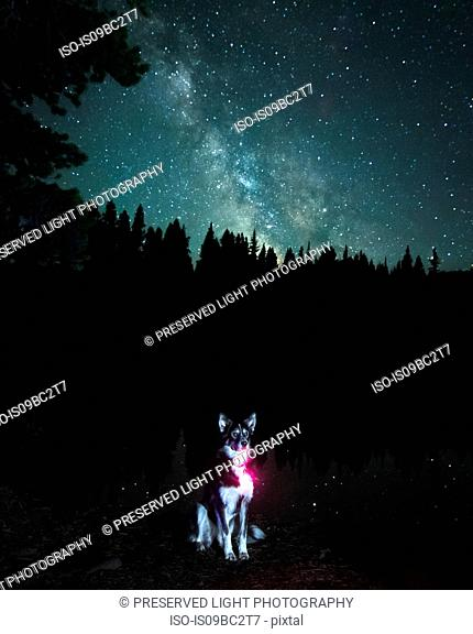 Portrait of dog against Milky Way Galaxy, Nickel Plate Provincial Park, Penticon, British Columbia, Canada