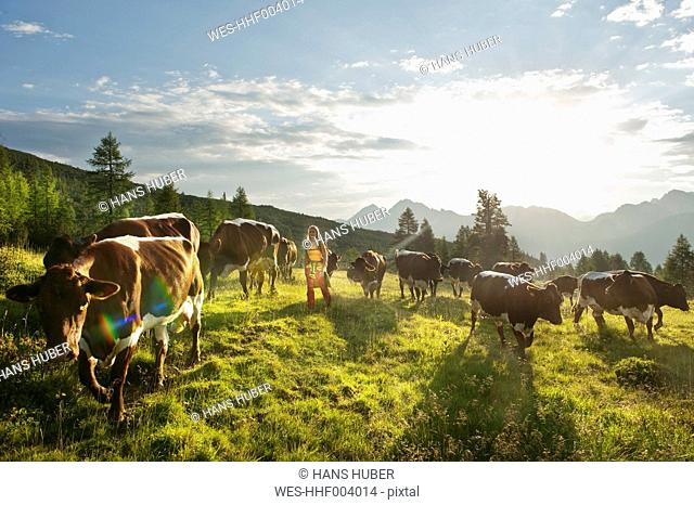 Austria, Salzburg County, Young woman walking in alpine meadow with cows