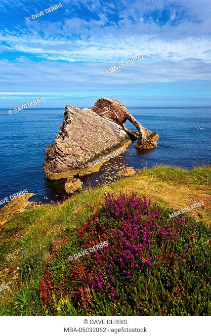 Bow Fiddle Rock, Portknockie, sea birds, rocks, island, coast, Scotland