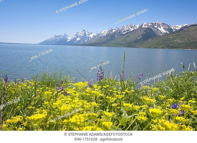 yellow wild flowers and the Grand Tetons