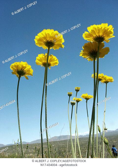 Sonora Desert springtime, vegetation