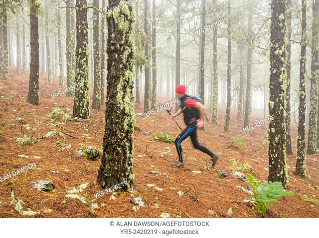 Man running through Pine forest in the mountains on Gran Canaria, Canary Islands, Spain