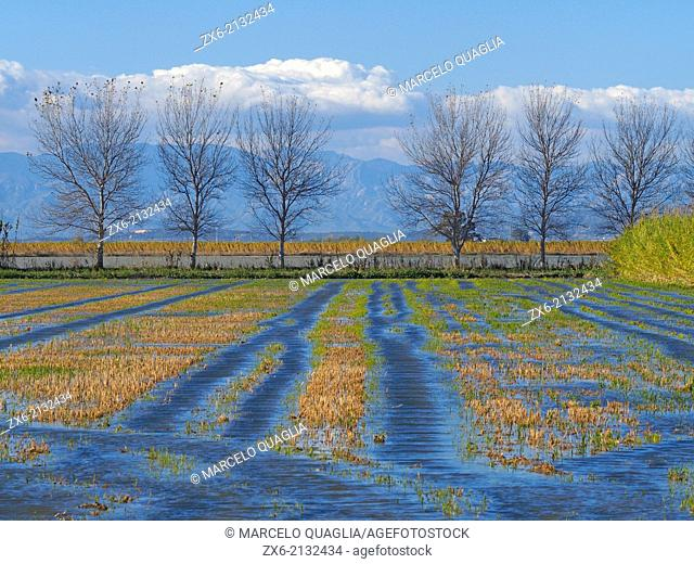 Flooded ricefields after harvest. Ebro River Delta Natural Park, Tarragona province, Catalonia, Spain