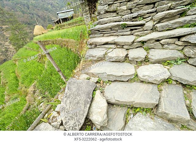Stone Stairs, Mountain Footpath, Trek to Annapurna Base Camp, Annapurna Conservation Area, Himalaya, Nepal, Asia