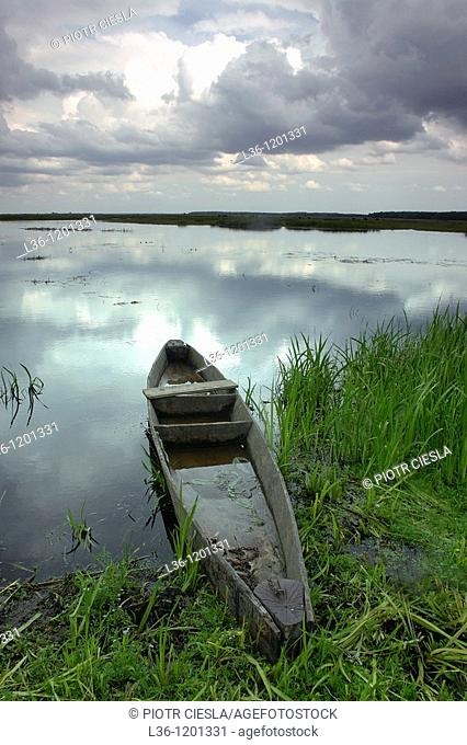 Biebrza river in Biebrza National Park (Biebrzanski Park Narodowy). Podlasie region. Poland