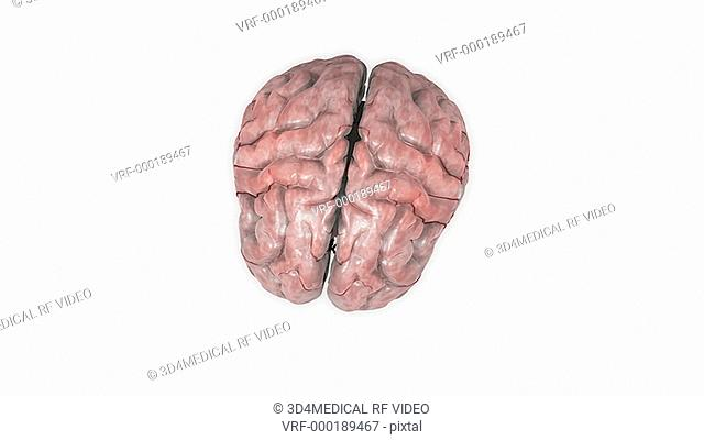 Animation depicting the anatomy of the brain. The camera begins from an elevated position which moves into a full rotation