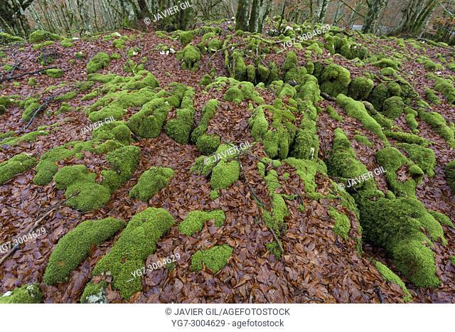 Forest in Urbasa, Navarra, Spain
