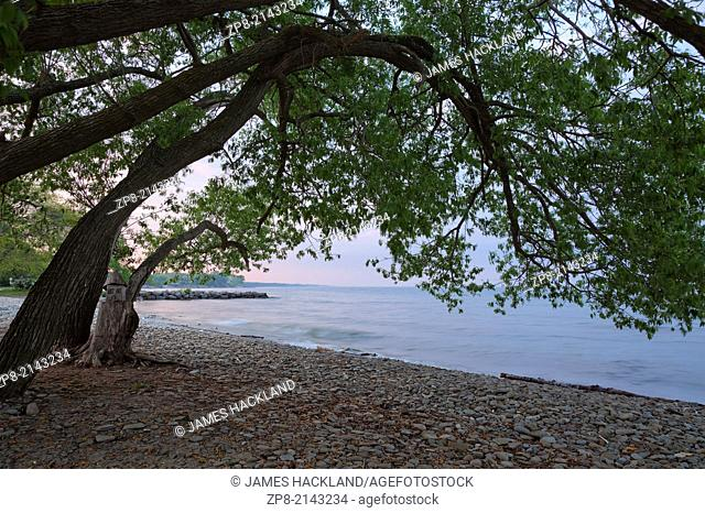 Trees hanging over Lake Ontario at sunset in Oakville, Ontario, Canada