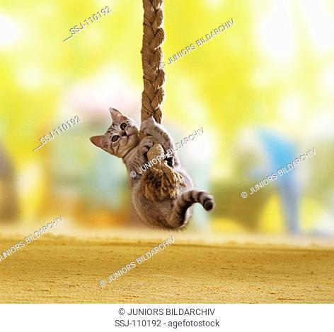 animal,cat,domestic-cat,kitten