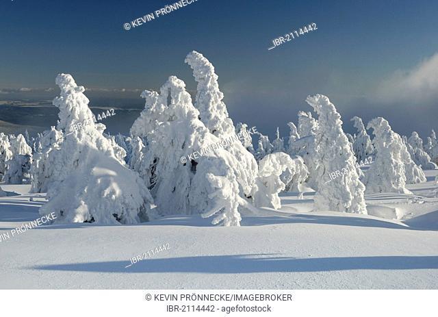 Snow-covered trees, winter landscape on Brocken mountain, Harz, Saxony-Anhalt, Germany, Europe